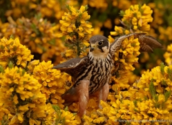 hobby-4188-northumberland-copyright-photographers-on-safari-com