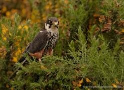 hobby-4189-northumberland-copyright-photographers-on-safari-com