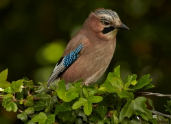 jay-copyright-photographers-on-safari-com-8519