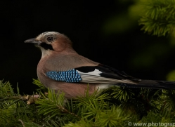 jay-copyright-photographers-on-safari-com-8523