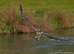 osprey-hide-rutland-copyright-photographers-on-safari-com-9463