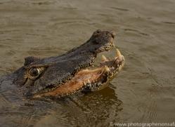 caiman-copyright-photographers-on-safari-com-7143