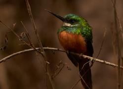 jacamar-copyright-photographers-on-safari-com-7238