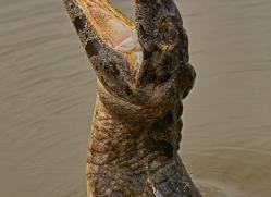 caiman-copyright-photographers-on-safari-com-7145