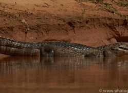 caiman-copyright-photographers-on-safari-com-7147