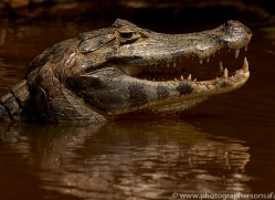 caiman-copyright-photographers-on-safari-com-7150