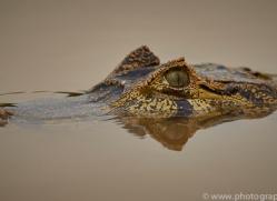 caiman-copyright-photographers-on-safari-com-7152