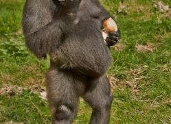 Gorilla 2014 -12copyright-photographers-on-safari-com