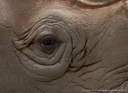 black-rhino-port-lympne-2235-copyright-photographers-on-safari-com