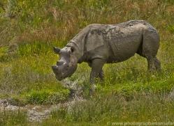 Black Rhino 2014 -2copyright-photographers-on-safari-com