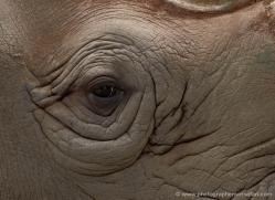 black-rhino-port-lympne-2235-copyright-photographers-on-safari-com