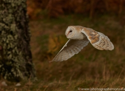 Barn Owl 2014-33copyright-photographers-on-safari-com