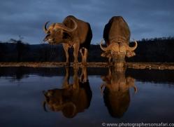 african-buffalo-copyright-photographers-on-safari-com-7823