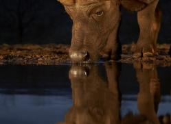african-buffalo-copyright-photographers-on-safari-com-7824