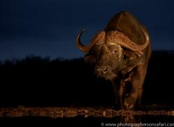 african-buffalo-copyright-photographers-on-safari-com-7820