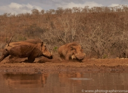 warthog-copyright-photographers-on-safari-com-7914-1