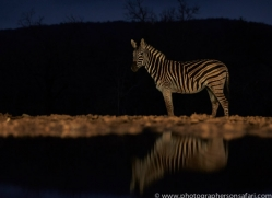 zebra-copyright-photographers-on-safari-com-7932-1