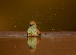 Blue-Waxbill-copyright-photographers-on-safari-com-6235