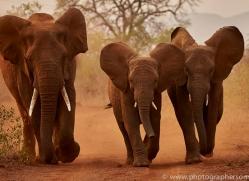 Elephant-copyright-photographers-on-safari-com-6268