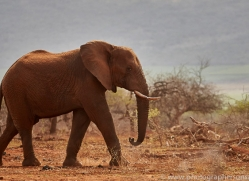 Elephant-copyright-photographers-on-safari-com-6272