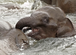 indian-elephant-sri-lanka-2948-copyright-photographers-on-safari-com