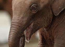 indian-elephant-sri-lanka-2951-copyright-photographers-on-safari-com