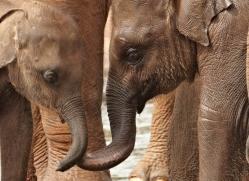 indian-elephant-sri-lanka-2952-copyright-photographers-on-safari-com
