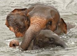 indian-elephant-sri-lanka-2955-copyright-photographers-on-safari-com