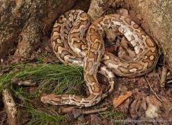 snake-sri-lanka-2854-copyright-photographers-on-safari-com