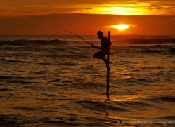 stilt-fisherman-sri-lanka-2918-copyright-photographers-on-safari-com
