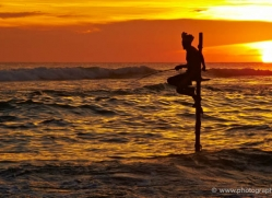 stilt-fisherman-sri-lanka-2919-copyright-photographers-on-safari-com