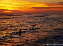 stilt-fisherman-sri-lanka-2921-copyright-photographers-on-safari-com