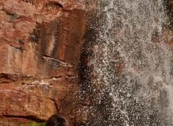 brown-bear-moab-2094-copyright-photographers-on-safari-com