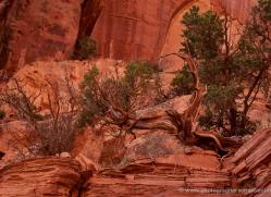 landscapes-moab-2113-copyright-photographers-on-safari-com