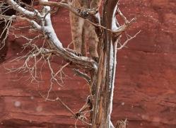 mountain-lion-puma-moab-2020-copyright-photographers-on-safari-com