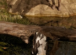 puma-mountain-lion-whf-2384-copyright-photographers-on-safari-com
