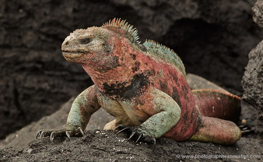 Galapagos Cruise Report – Feb 2013