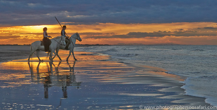 Camargue Horses 2015 -48copyright-photographers-on-safari-com