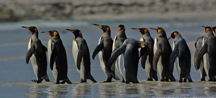 Falkland Islands Photography Recce Tour December 2017 /  January 2018